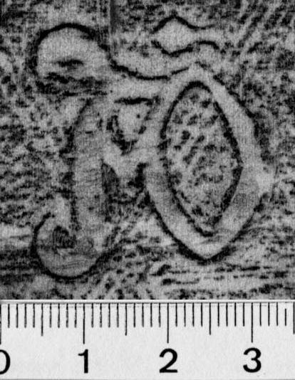 Image Description for https://www.hist-einband.de/Bilder/BSB/MIG/images/m0113901.jpg