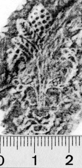 Image Description for https://www.hist-einband.de/Bilder/BSB/MIG/images/m0819501.jpg