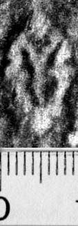 Image Description for https://www.hist-einband.de/Bilder/BSB/MIG/images/m0820101.jpg