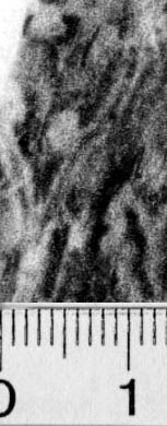 Image Description for https://www.hist-einband.de/Bilder/BSB/MIG/images/m0820102.jpg