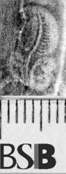 Image Description for https://www.hist-einband.de/Bilder/BSB/MIG/images/m1206801.jpg
