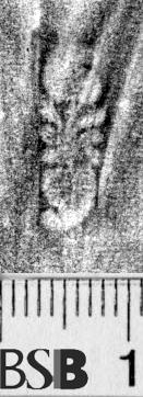 Image Description for https://www.hist-einband.de/Bilder/BSB/MIG/images/m1303904.jpg
