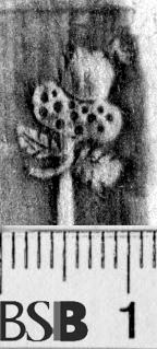 Image Description for https://www.hist-einband.de/Bilder/BSB/MIG/images/m1403402.jpg