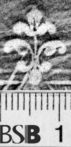 Image Description for https://www.hist-einband.de/Bilder/BSB/MIG/images/m1865902.jpg