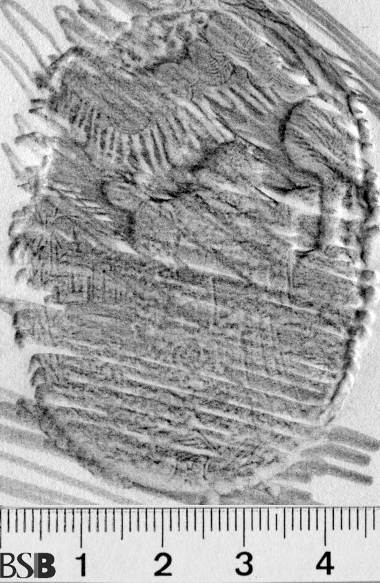 Image Description for https://www.hist-einband.de/Bilder/BSB/MIG/images/m1921904.jpg