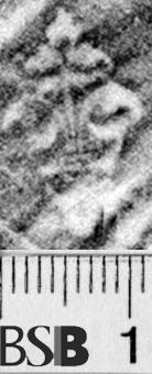 Image Description for https://www.hist-einband.de/Bilder/BSB/MIG/images/m1922602.jpg