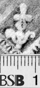 Image Description for https://www.hist-einband.de/Bilder/BSB/MIG/images/m1934405.jpg
