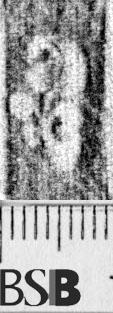 Image Description for https://www.hist-einband.de/Bilder/BSB/MIG/images/m1944407.jpg