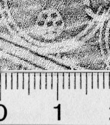 Image Description for https://www.hist-einband.de/Bilder/BSB/MIG/images/m3400506.jpg