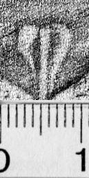 Image Description for https://www.hist-einband.de/Bilder/BSB/MIG/images/m4608003.jpg