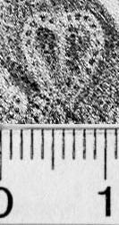 Image Description for https://www.hist-einband.de/Bilder/BSB/MIG/images/m4610202.jpg