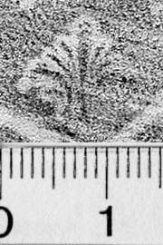 Image Description for https://www.hist-einband.de/Bilder/BSB/MIG/images/m4610203.jpg