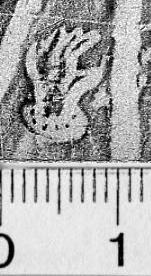 Image Description for https://www.hist-einband.de/Bilder/BSB/MIG/images/m4610306.jpg