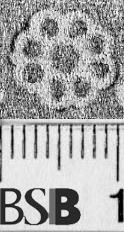 Image Description for https://www.hist-einband.de/Bilder/BSB/MIG/images/m4705203.jpg