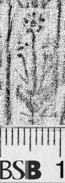 Image Description for https://www.hist-einband.de/Bilder/BSB/MIG/images/m4908302.jpg