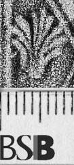 Image Description for https://www.hist-einband.de/Bilder/BSB/MIG/images/m5302006.jpg