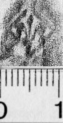 Image Description for https://www.hist-einband.de/Bilder/BSB/MIG/images/m5802705.jpg