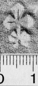Image Description for https://www.hist-einband.de/Bilder/BSB/MIG/images/m5803004.jpg