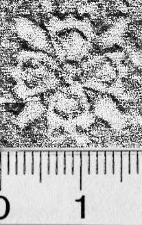 Image Description for https://www.hist-einband.de/Bilder/BSB/MIG/images/m5803402.jpg