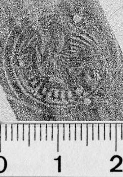 Image Description for https://www.hist-einband.de/Bilder/BSB/MIG/images/m5808404.jpg