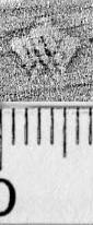Image Description for https://www.hist-einband.de/Bilder/BSB/MIG/images/m5903203.jpg