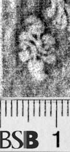 Image Description for https://www.hist-einband.de/Bilder/BSB/MIG/images/m6551505.jpg