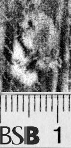 Image Description for https://www.hist-einband.de/Bilder/BSB/MIG/images/m6582905.jpg