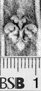 Image Description for https://www.hist-einband.de/Bilder/BSB/MIG/images/m6643105.jpg