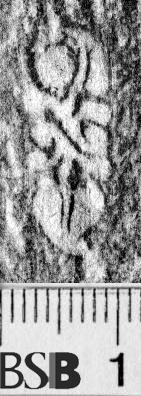 Image Description for https://www.hist-einband.de/Bilder/BSB/MIG/images/m7102206.jpg