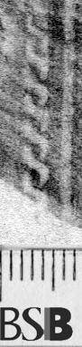 Image Description for https://www.hist-einband.de/Bilder/BSB/MIG/images/m7121404.jpg