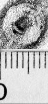 Image Description for https://www.hist-einband.de/Bilder/BSB/MIG/images/m9906801.jpg