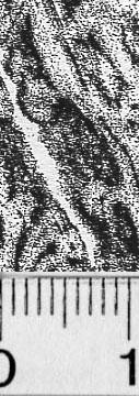 Image Description for https://www.hist-einband.de/Bilder/BSB/MIG/images/m9909707.jpg