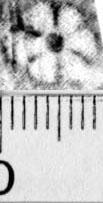 Image Description for https://www.hist-einband.de/Bilder/BSB/MIG/images/m9911106.jpg