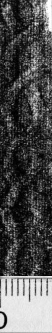 Image Description for https://www.hist-einband.de/Bilder/BSB/MIG/images/m9917107.jpg