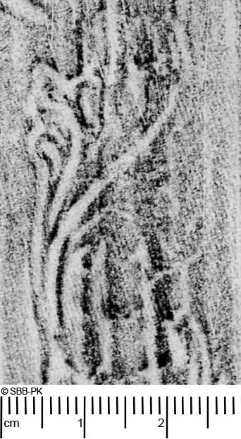 Image Description for https://www.hist-einband.de/Bilder/SBB/MIG/ebpics/images/bw301/039/bw301w05.jpg