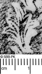 Image Description for https://www.hist-einband.de/Bilder/SBB/MIG/ebpics/images/bw305/005/bw305w01.jpg