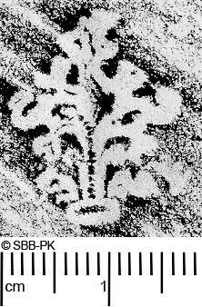 Image Description for https://www.hist-einband.de/Bilder/SBB/MIG/ebpics/images/bw409/002/bw409w03.jpg