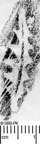 Image Description for https://www.hist-einband.de/Bilder/SBB/MIG/ebpics/images/bw409/015/bw409w01.jpg