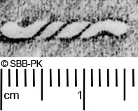 Image Description for https://www.hist-einband.de/Bilder/SBB/MIG/ebpics/images/bw506/004/bw506w01.jpg