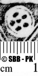 Image Description for https://www.hist-einband.de/Bilder/SBB/MIG/ebpics/images/bw508/010/bw508w04.jpg