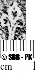 Image Description for https://www.hist-einband.de/Bilder/SBB/MIG/ebpics/images/bw614/006/bw614w05.jpg