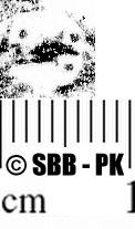 Image Description for https://www.hist-einband.de/Bilder/SBB/MIG/ebpics/images/bw801/007/bw801w06.jpg