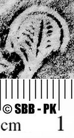 Image Description for https://www.hist-einband.de/Bilder/SBB/MIG/ebpics/images/bw925/001/bw925w01.jpg