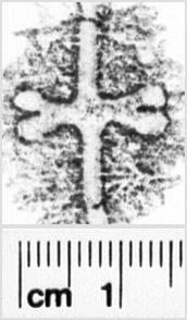 Image Description for https://www.hist-einband.de/Bilder/SBB/MIG/terminologie/bilder/s00242.jpg